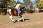 Basic Tent Pegging Training - 1 Picture