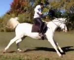 Charlie's Initial Training for Lance and Tent Pegging Picture