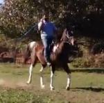 Initial Training for Lance and Tent Pegging Picture
