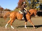 New Rider Training for Tent Pegging Picture